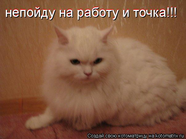 Котоматрица: непойду на работу и точка!!! непойду на работу и точка!!!