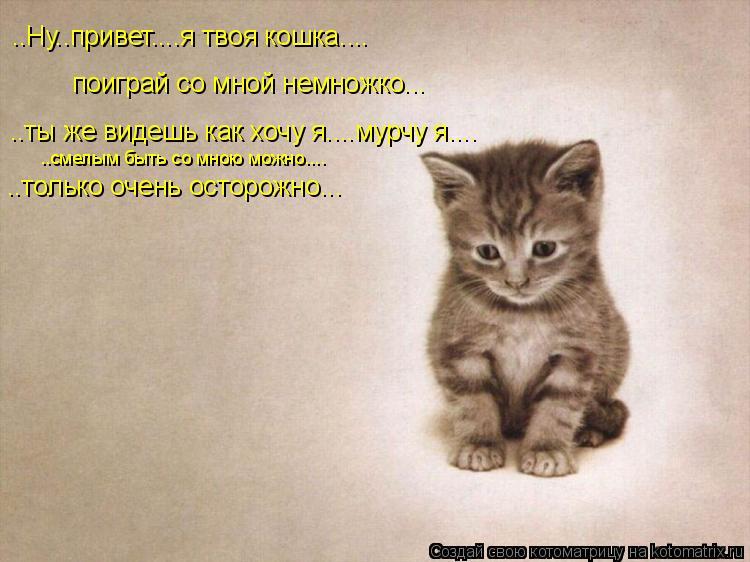 Котоматрица: ..Ну..привет....я твоя кошка.... поиграй со мной немножко... ..ты же видешь как хочу я....мурчу я.... ..только очень осторожно... ..смелым быть со мно