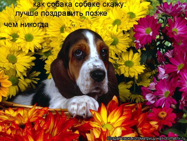 Котоматрица: как собака собаке скажу: лучше поздравить позже чем никогда