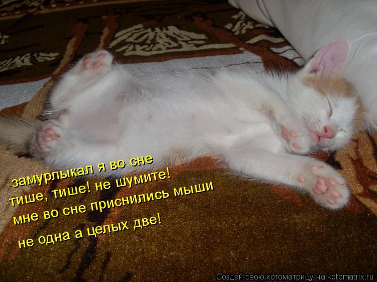 Котоматрица: замурлыкал я во сне тише, тише! не шумите! мне во сне приснились мыши не одна а целых две!