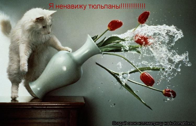 Котоматрица: Я ненавижу тюльпаны!!!!!!!!!!!!