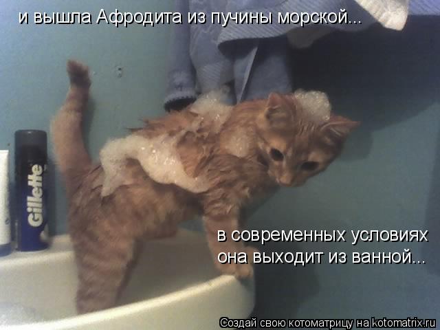 Котоматрица: и вышла Афродита из пучины морской... в современных условиях она выходит из ванной...