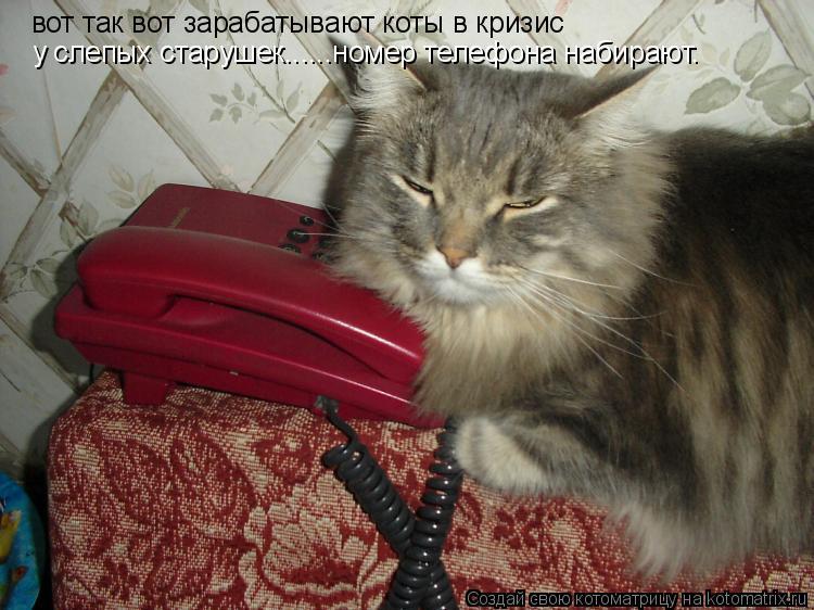 Котоматрица: вот так вот зарабатывают коты в кризис  у слепых старушек......номер телефона набирают.