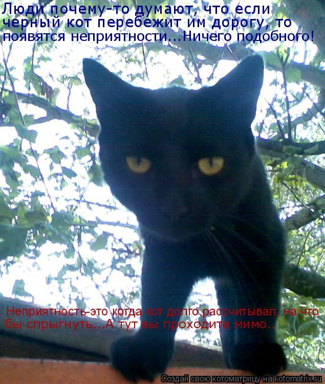 Котоматрица: Люди почему-то думают, что если  черный кот перебежит им дорогу, то появятся неприятности...Ничего подобного! Неприятность-это когда кот дол