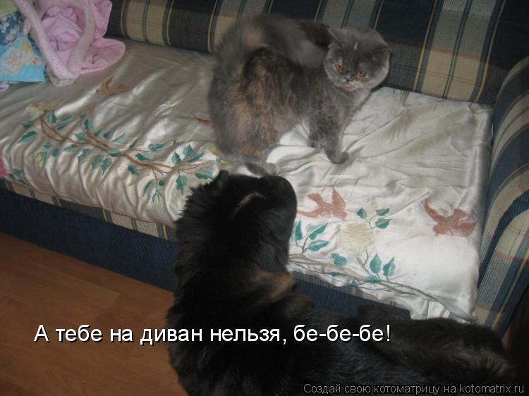 Котоматрица: А тебе на диван нельзя, бе-бе-бе!