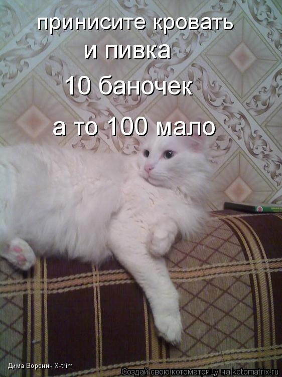 Котоматрица: принисите кровать и пивка 10 баночек а то 100 мало Дима Воронин X-trim