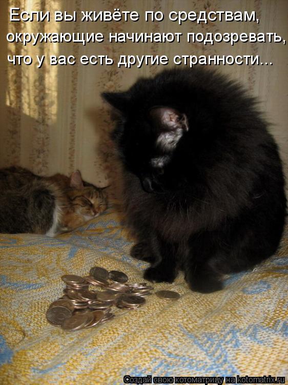 Котоматрица: Если вы живёте по средствам,  окружающие начинают подозревать, что у вас есть другие странности...