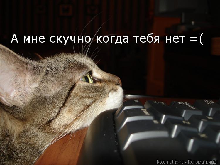 Котоматрица: А мне скучно когда тебя нет =(