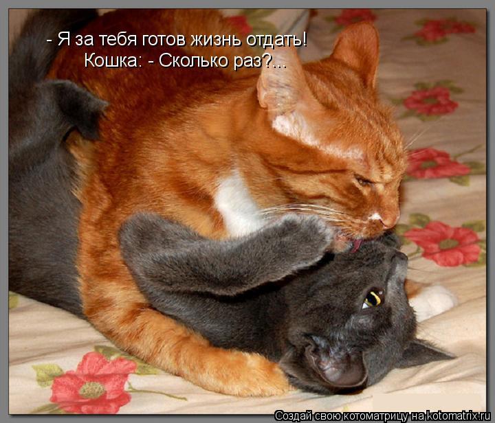 Котоматрица: - Я за тебя готов жизнь отдать!  Кошка: - Сколько раз?...