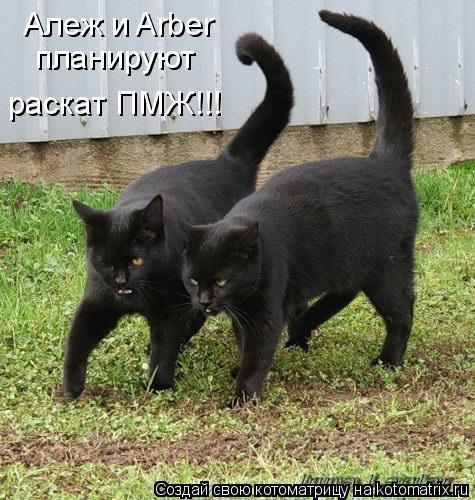 Котоматрица: Алеж и Arber  Алеж и Arber планируют раскат ПМЖ!!!