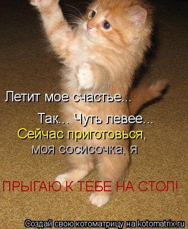 Котоматрица: Летит мое счастье... Так... Чуть левее... Сейчас приготовься, моя сосисочка, я ПРЫГАЮ К ТЕБЕ НА СТОЛ!