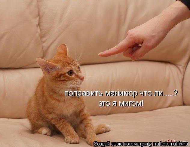 Котоматрица: поправить маникюр что ли..... это я мигом! ?