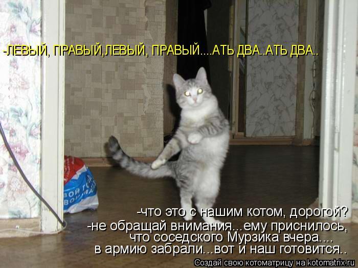 Котоматрица: -ЛЕВЫЙ, ПРАВЫЙ,ЛЕВЫЙ, ПРАВЫЙ....АТЬ ДВА..АТЬ ДВА.. -что это с нашим котом, дорогой? -не обращай внимания...ему приснилось, что соседского Мурзика