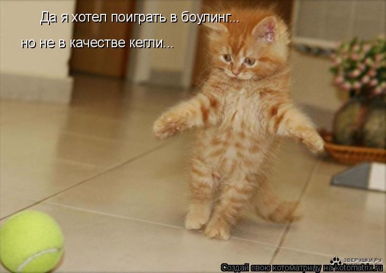 Котоматрица: Да я хотел поиграть в боулинг...  но не в качестве кегли...