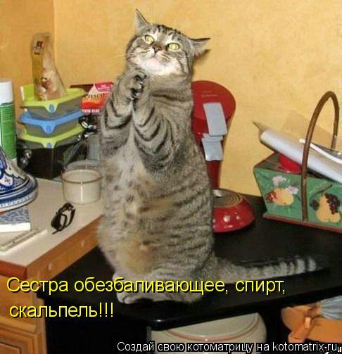 Котоматрица: скальпель!!! Сестра обезбаливающее, спирт,