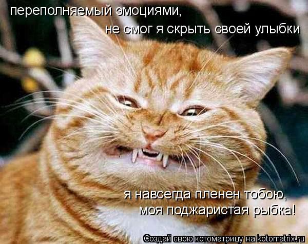 Котоматрица: не смог я скрыть своей улыбки я навсегда пленен тобою,  переполняемый эмоциями, моя поджаристая рыбка!