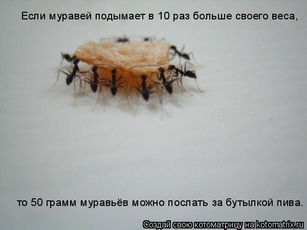 Котоматрица: Если муравей подымает в 10 раз больше своего веса,  то 50 грамм муравьёв можно послать за бутылкой пива.