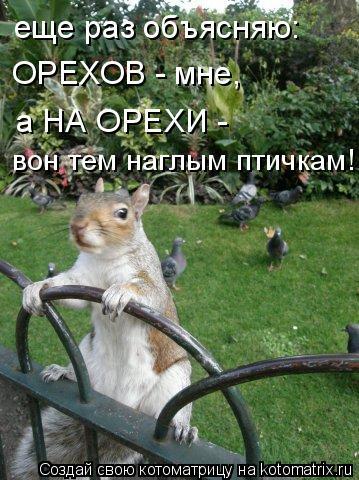 Котоматрица: еще раз объясняю: ОРЕХОВ - мне, а НА ОРЕХИ -  вон тем наглым птичкам!