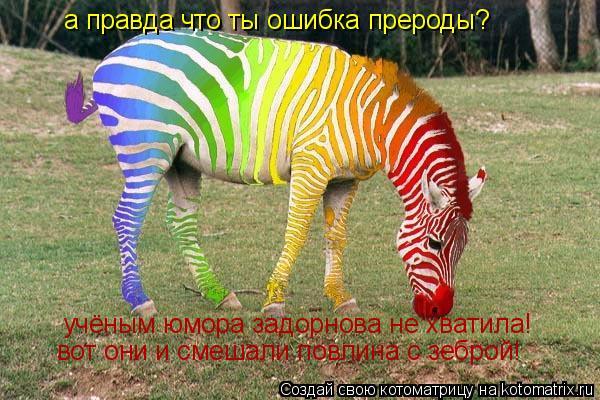 Котоматрица: а правда что ты ошибка прероды? учёным юмора задорнова не хватила! вот они и смешали повлина с зеброй!