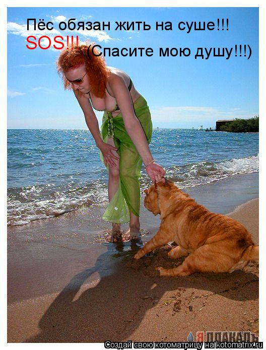 Котоматрица: Пёс обязан жить на суше!!! SOS!!!  (Спасите мою душу!!!)