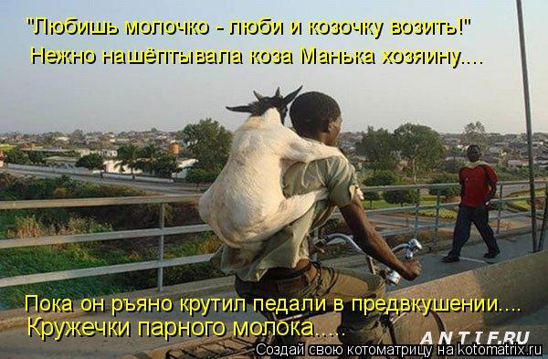 """Котоматрица: """"Любишь молочко - люби и козочку возить!"""" Нежно нашёптывала коза Манька хозяину.... Кружечки парного молока..... Пока он ръяно крутил педали в п"""