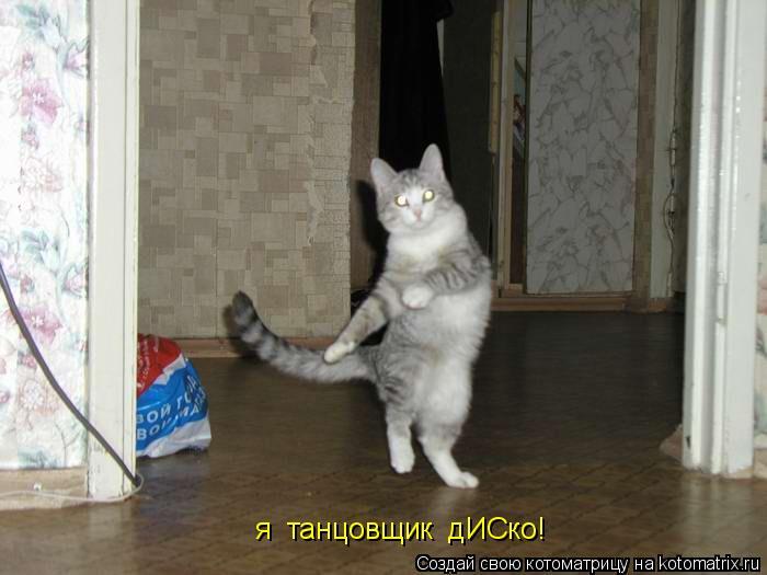 Котоматрица: я  танцовщик   я  танцовщик  дИСко!