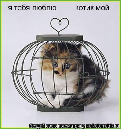 Котоматрица: я тебя люблю         котик мой