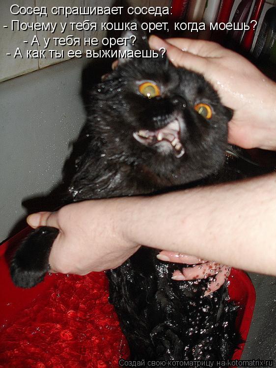 Котоматрица: Сосед спрашивает соседа: - Почему у тебя кошка орет, когда моешь? - А у тебя не орет? - А как ты ее выжимаешь?