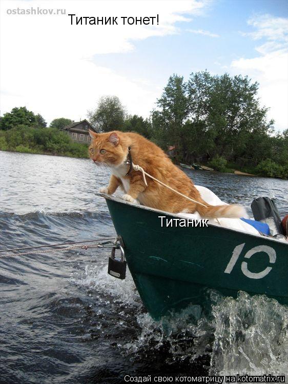 Котоматрица: Титаник тонет! Титаник