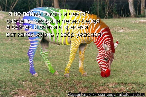 Котоматрица: я не пойму кокого я цвета? я не пойму кокого я цвета? сначало говорили чёрно-белая  а сёйчас и синяя и красная   вот какая жизнь у зебр ужасная!