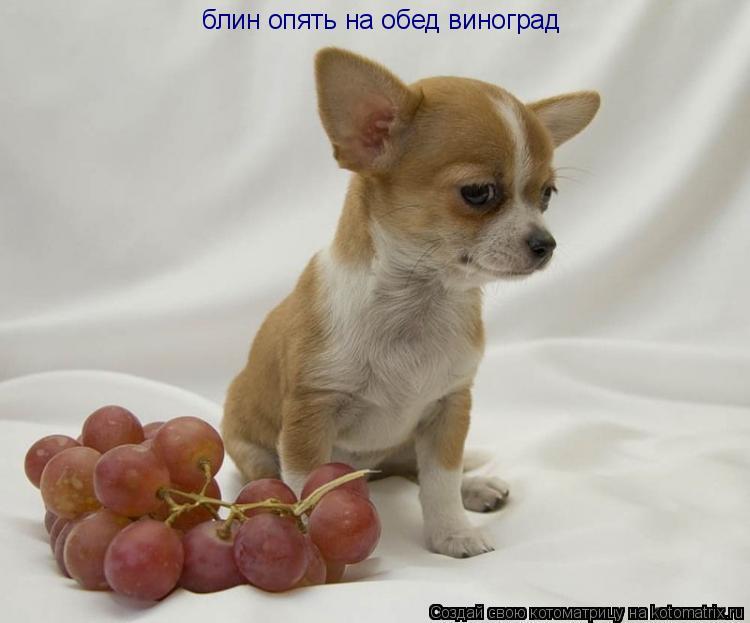 Котоматрица: блин опять на обед виноград