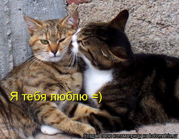 Котоматрица: Я тебя люблю =)