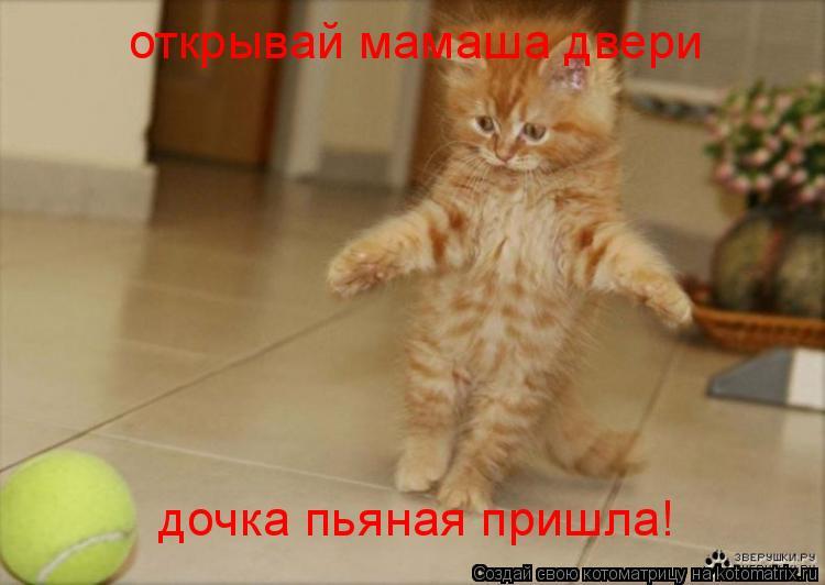 Котоматрица: открывай мамаша двери  дочка пьяная пришла!