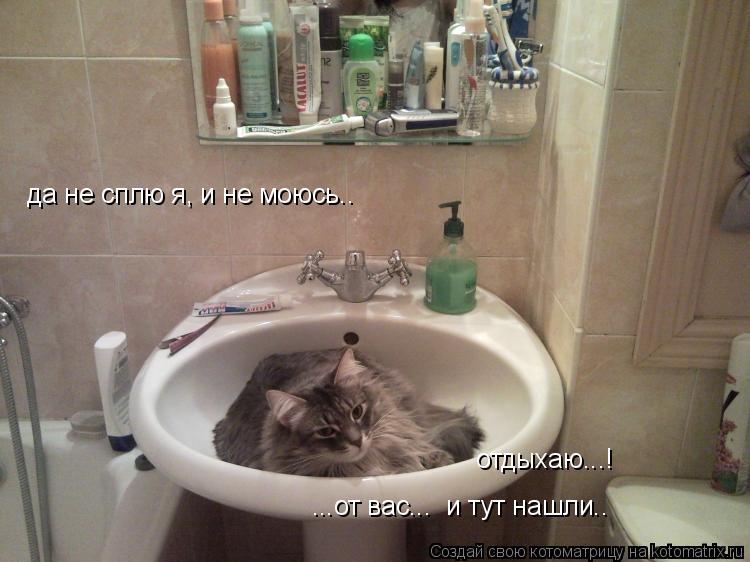 Котоматрица: да не сплю я, и не моюсь.. отдыхаю...! ...от вас...  и тут нашли..