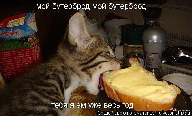 Котоматрица: мой бутерброд мой бутерброд  тебя я ем уже весь год