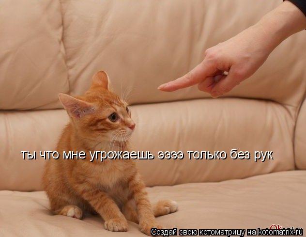 Котоматрица: ты что мне угрожаешь ээээ только без рук