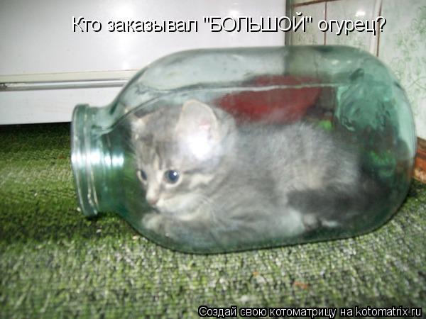 "Котоматрица: Кто заказывал ""БОЛЬШОЙ"" огурец?"