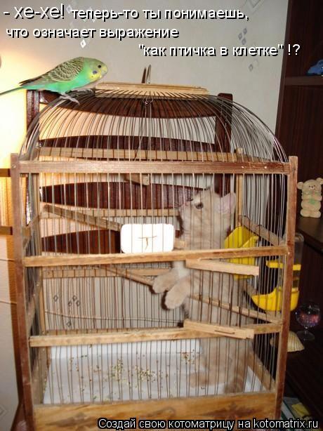 """Котоматрица: - хе-хе!  теперь-то ты понимаешь,  что означает выражение """"как птичка в клетке"""" !?"""