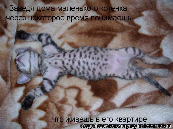 Котоматрица: Заведя дома маленького котенка через некоторое время понимаешь что живешь в его квартире