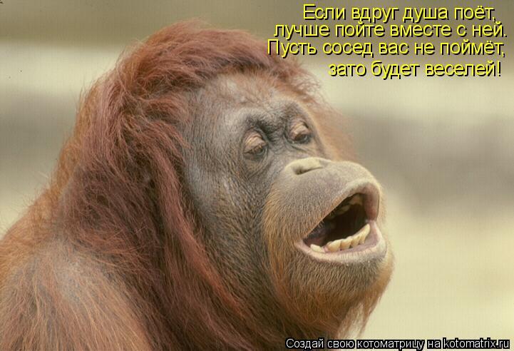 Котоматрица: Если вдруг душа поёт, лучше пойте вместе с ней. Пусть сосед вас не поймёт, зато будет веселей!