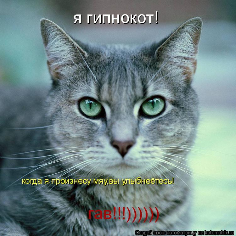 Котоматрица: я гипнокот! когда я произнесу мяу,вы улыбнеётесь! гав!!!))))))