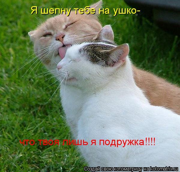 Котоматрица: Я шепну тебе на ушко- что твоя лишь я подружка!!!!