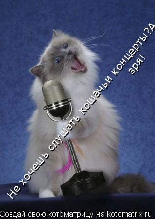 Котоматрица: Не хочешь слушать кошачьи концерты?А зря! зря!