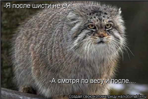 Котоматрица: -Я после шисти не ем! -А смотря по весу и после....