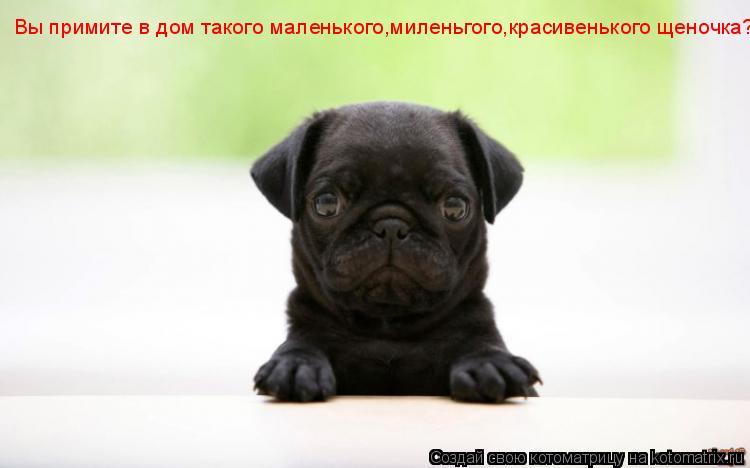 Котоматрица: Вы примите в дом такого маленького,миленьгого,красивенького щеночка?