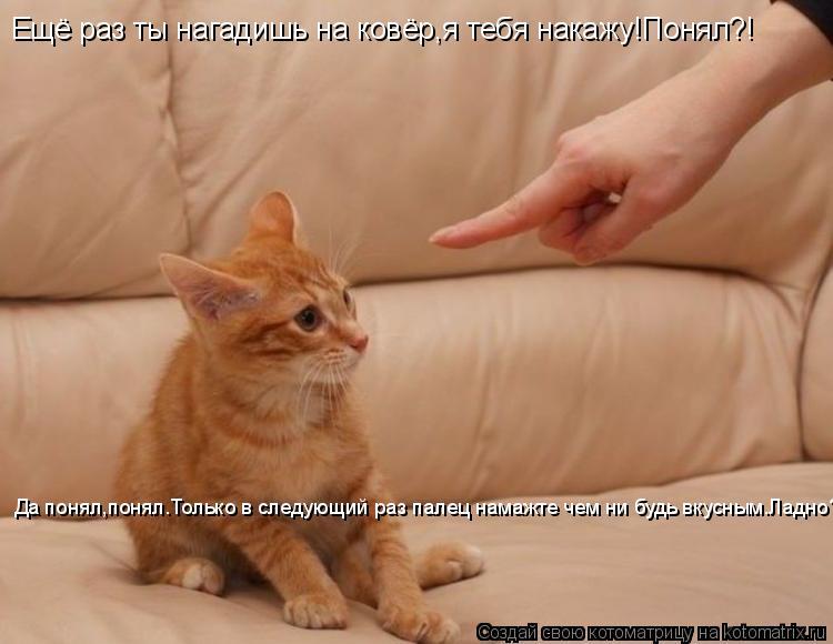 Котоматрица: Ещё раз ты нагадишь на ковёр,я тебя накажу!Понял?! Да понял,понял.Только в следующий раз палец намажте чем ни будь вкусным.Ладно?
