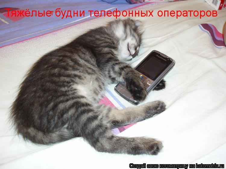Котоматрица: т Тяжёлые будни телефонных операторов