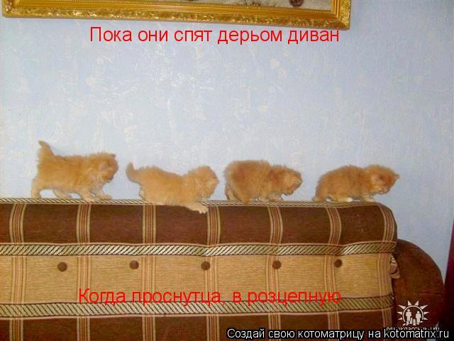 Котоматрица: Пока они спят дерьом диван Когда проснутца, в розцепную