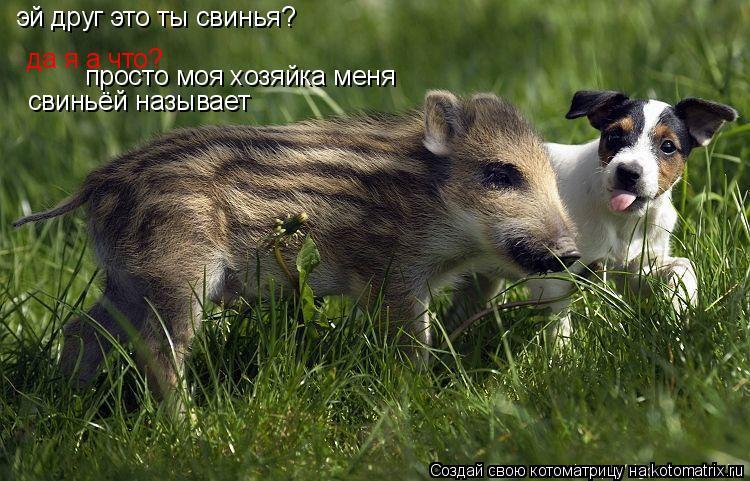 Котоматрица: эй друг это ты свинья? да я а что? да я а что? просто моя хозяйка меня свиньёй называет