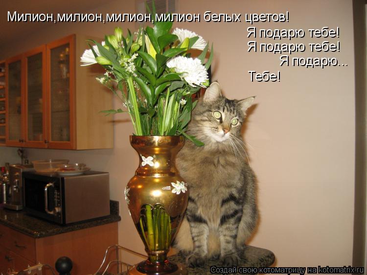Котоматрица: Милион,милион,милион,милион белых цветов! Я подарю тебе! Я подарю тебе! Я подарю... Тебе!